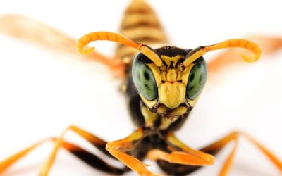 Walking Into A Wasp Nest… How 12 Stings Inspired Change